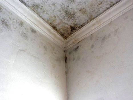 Picture of Mold on Ceiling and Walls