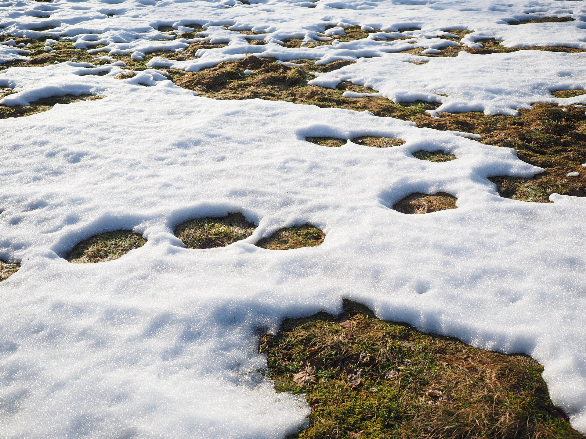 Picture of snow melting on a lawn.
