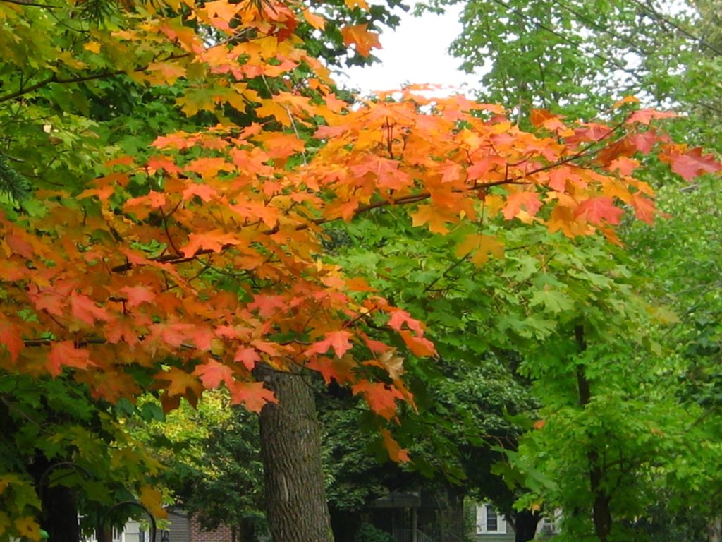 Picture of autumn leaves in Minnesota.